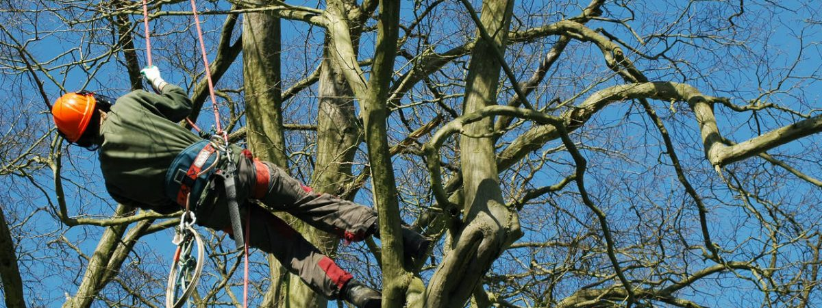 Tree Surgeons, Landscapers and Garden Services